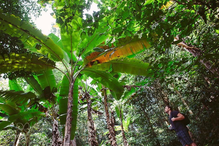 0011 vietnam ii aub 21563 - Vietnam 2013 - Vom Schmetterlingsdschungel in unterirdische Paradiese