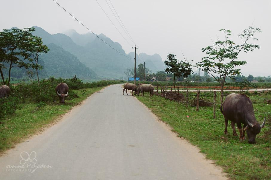 0021 vietnam ii aub 21674 - Vietnam 2013 - Vom Schmetterlingsdschungel in unterirdische Paradiese