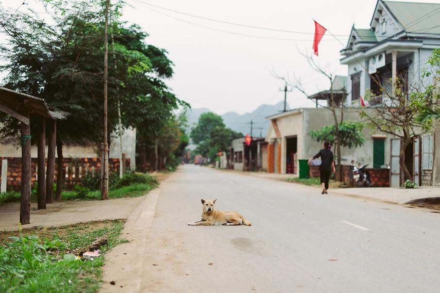 0022 vietnam ii aub 21686 - Vietnam 2013 - Vom Schmetterlingsdschungel in unterirdische Paradiese