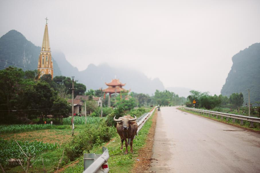0028 vietnam ii aub 21736 - Vietnam 2013 - Vom Schmetterlingsdschungel in unterirdische Paradiese