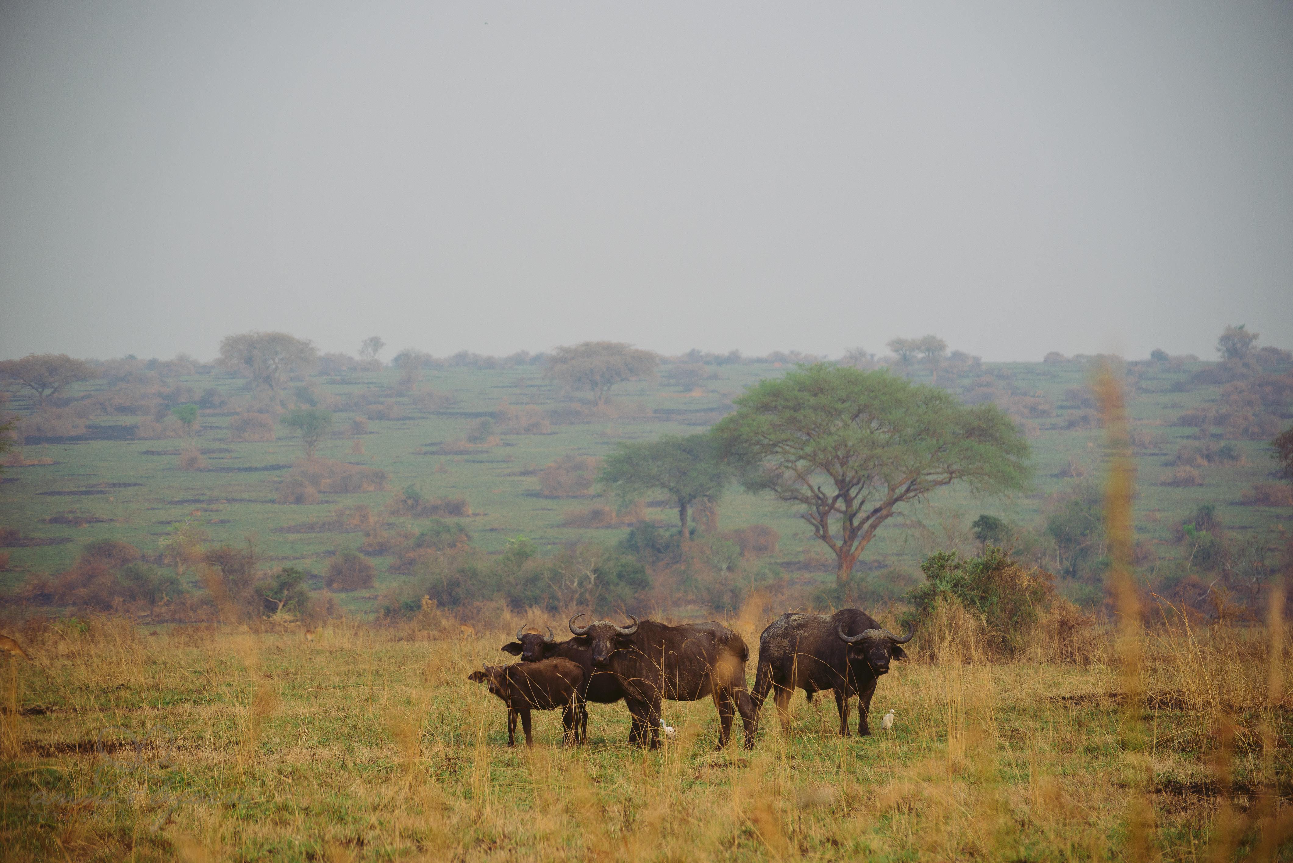0022 uganda anneundbjoern aub 4147 2 - This is Uganda (1/2) - 2.500 km mit Jeep & Zelt durchs Land