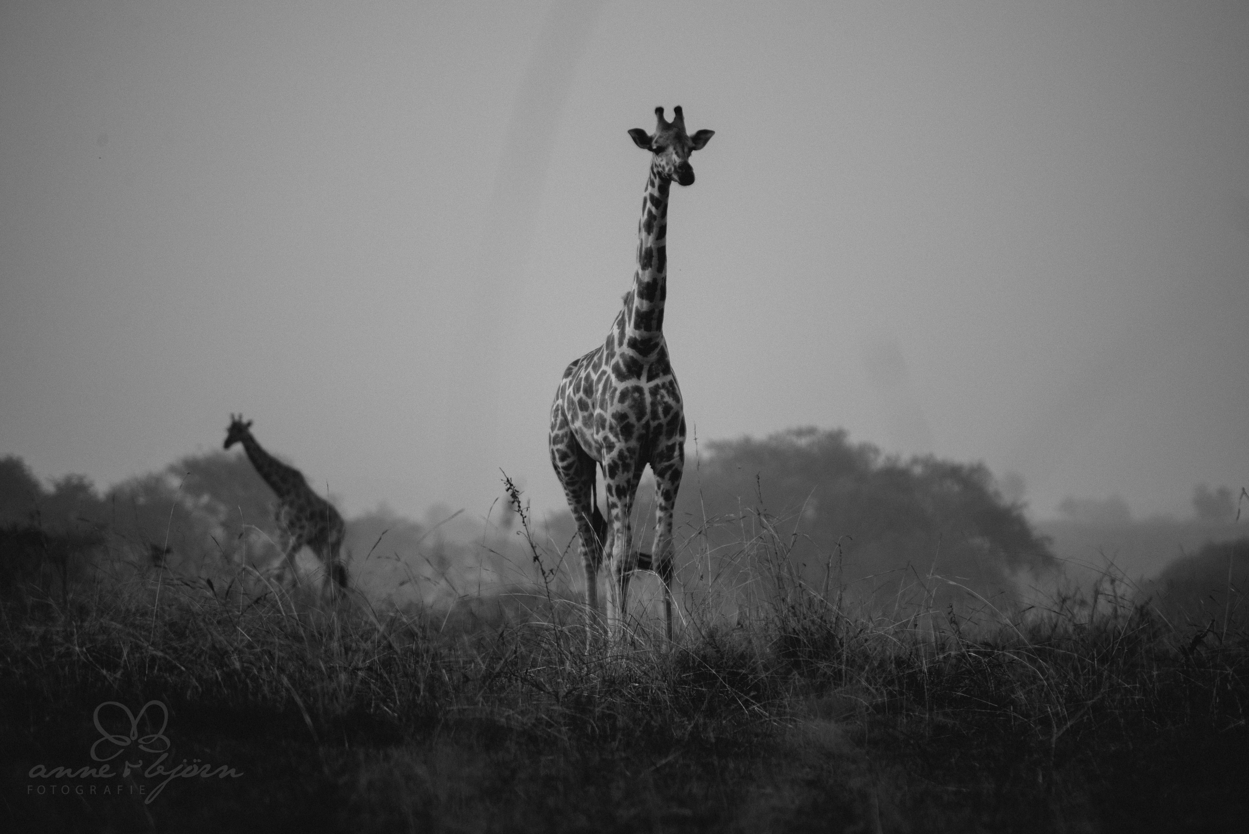 0026 uganda anneundbjoern aub 4152 2 - This is Uganda (1/2) - 2.500 km mit Jeep & Zelt durchs Land