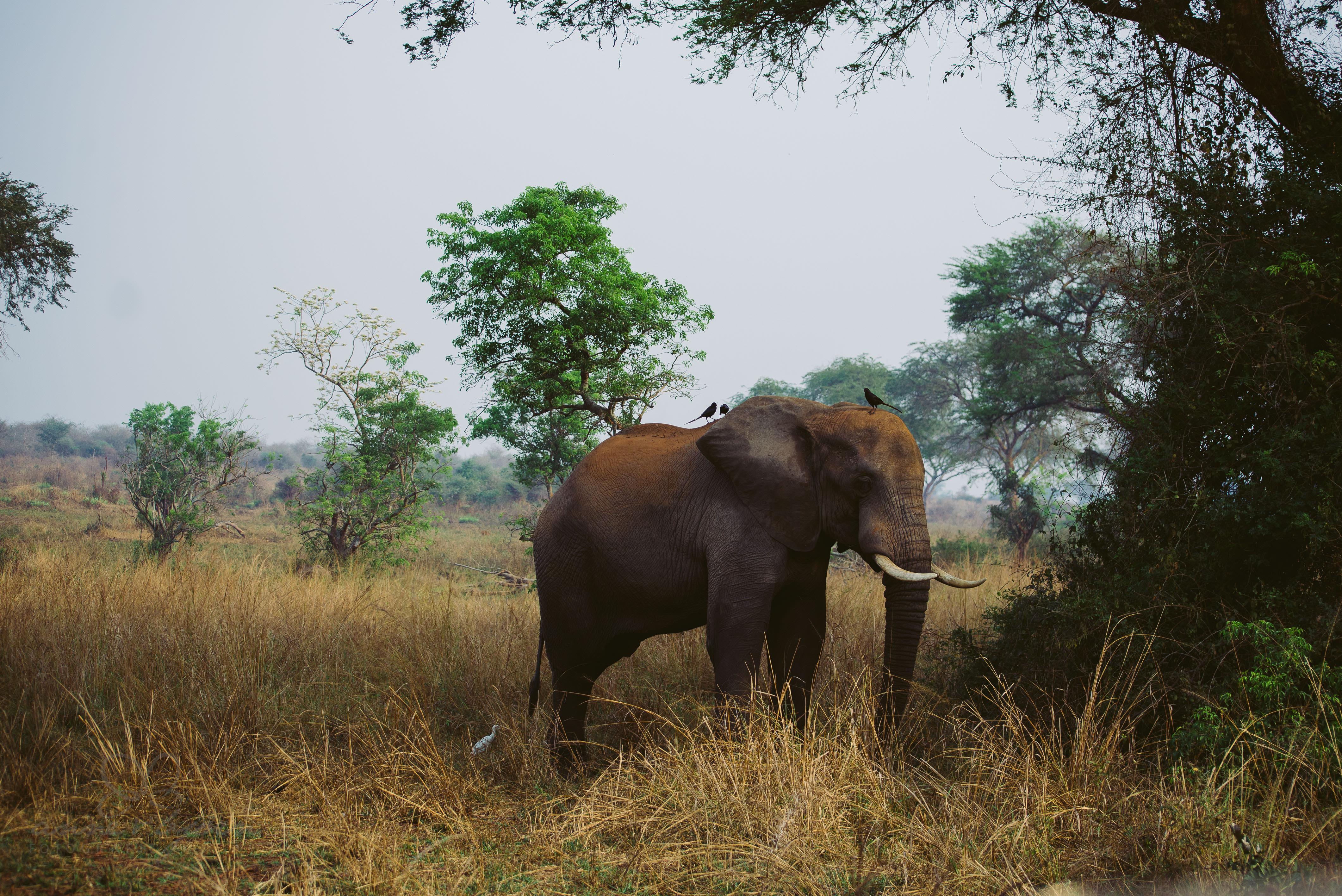 0027 uganda anneundbjoern aub 4184 2 - This is Uganda (1/2) - 2.500 km mit Jeep & Zelt durchs Land