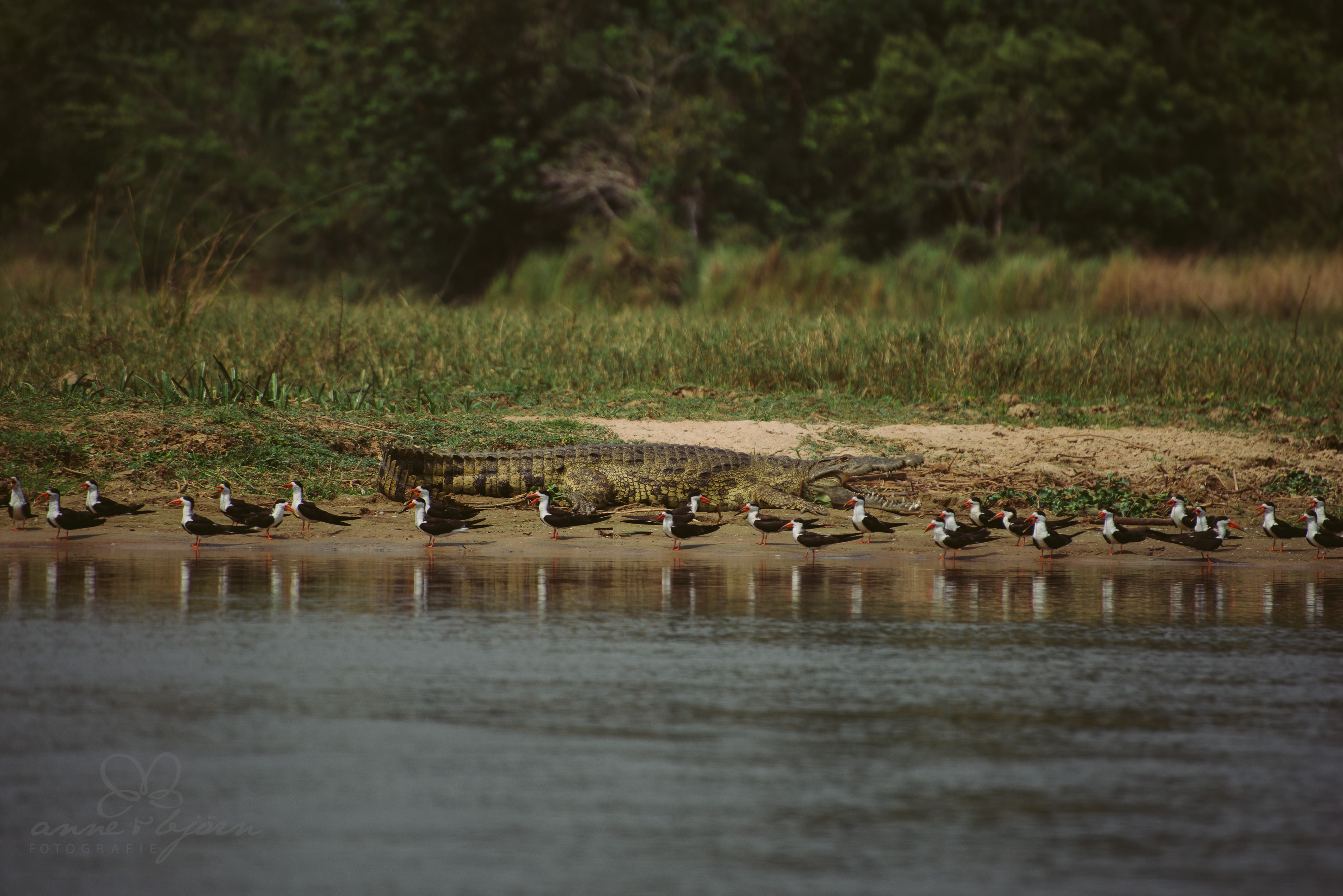 0029 uganda anneundbjoern aub 6952 2 - This is Uganda (1/2) - 2.500 km mit Jeep & Zelt durchs Land