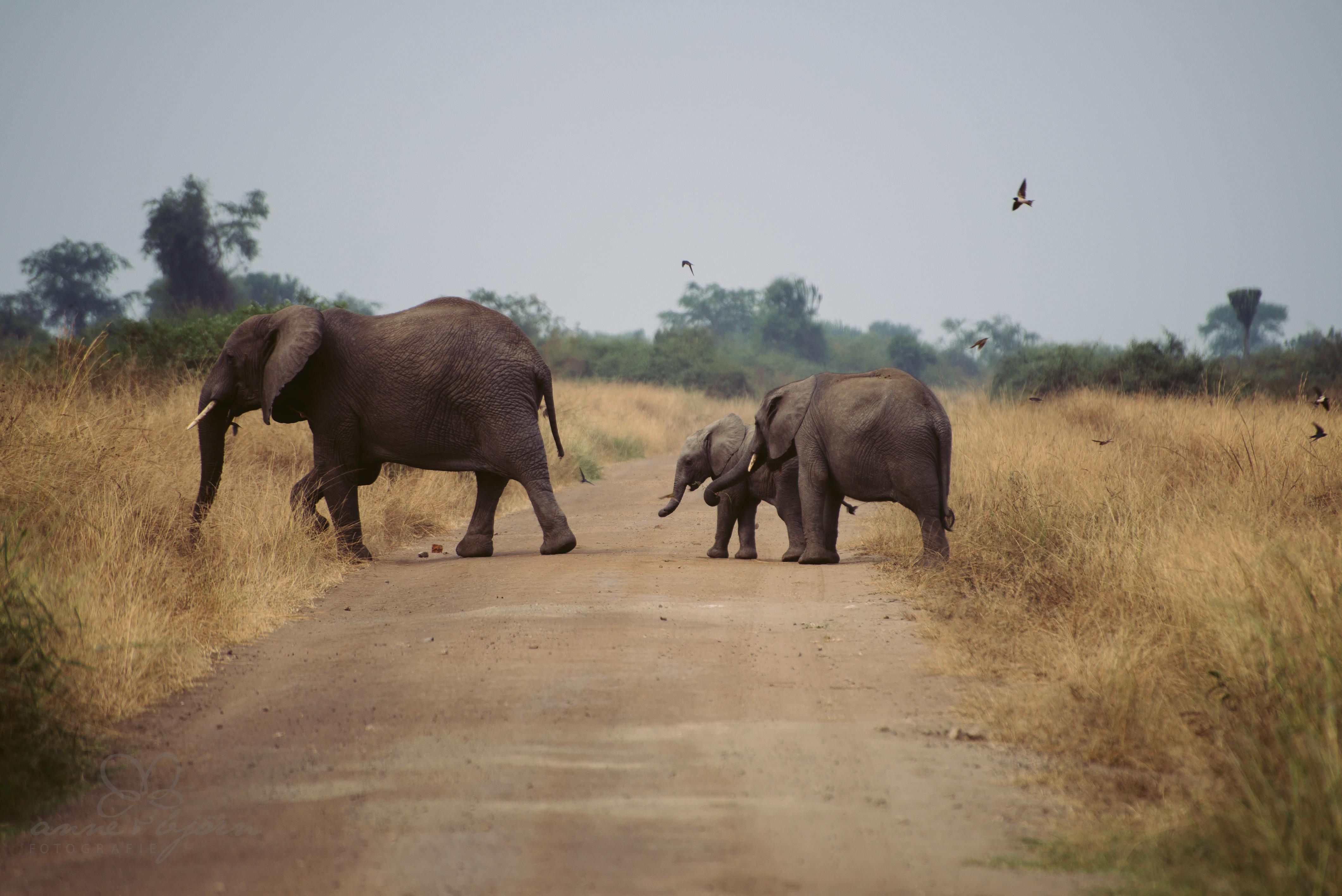 0071 uganda anneundbjoern nd8 7795 2 - This is Uganda (1/2) - 2.500 km mit Jeep & Zelt durchs Land