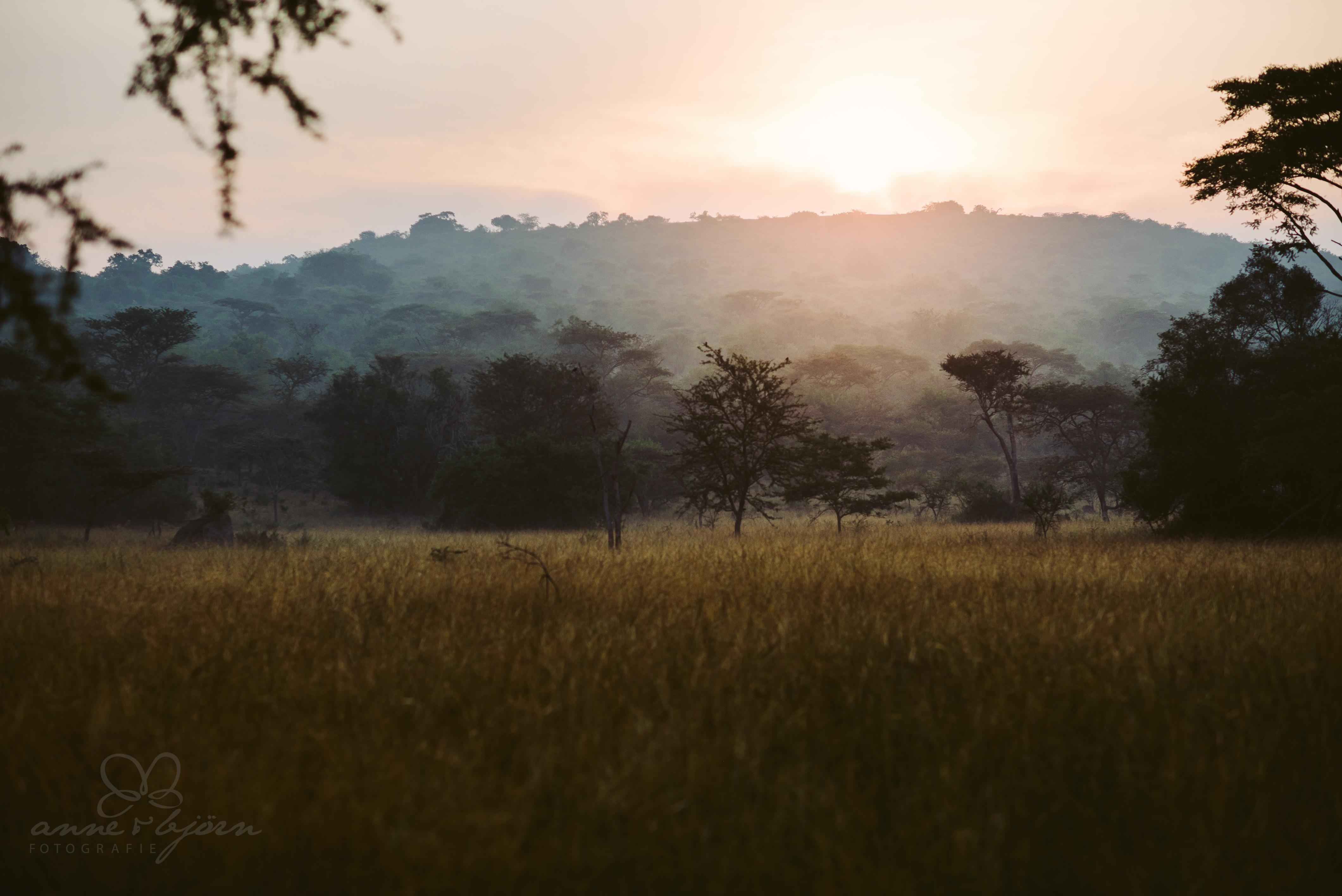 0082 uganda anneundbjoern nd6 5577 2 - This is Uganda (1/2) - 2.500 km mit Jeep & Zelt durchs Land