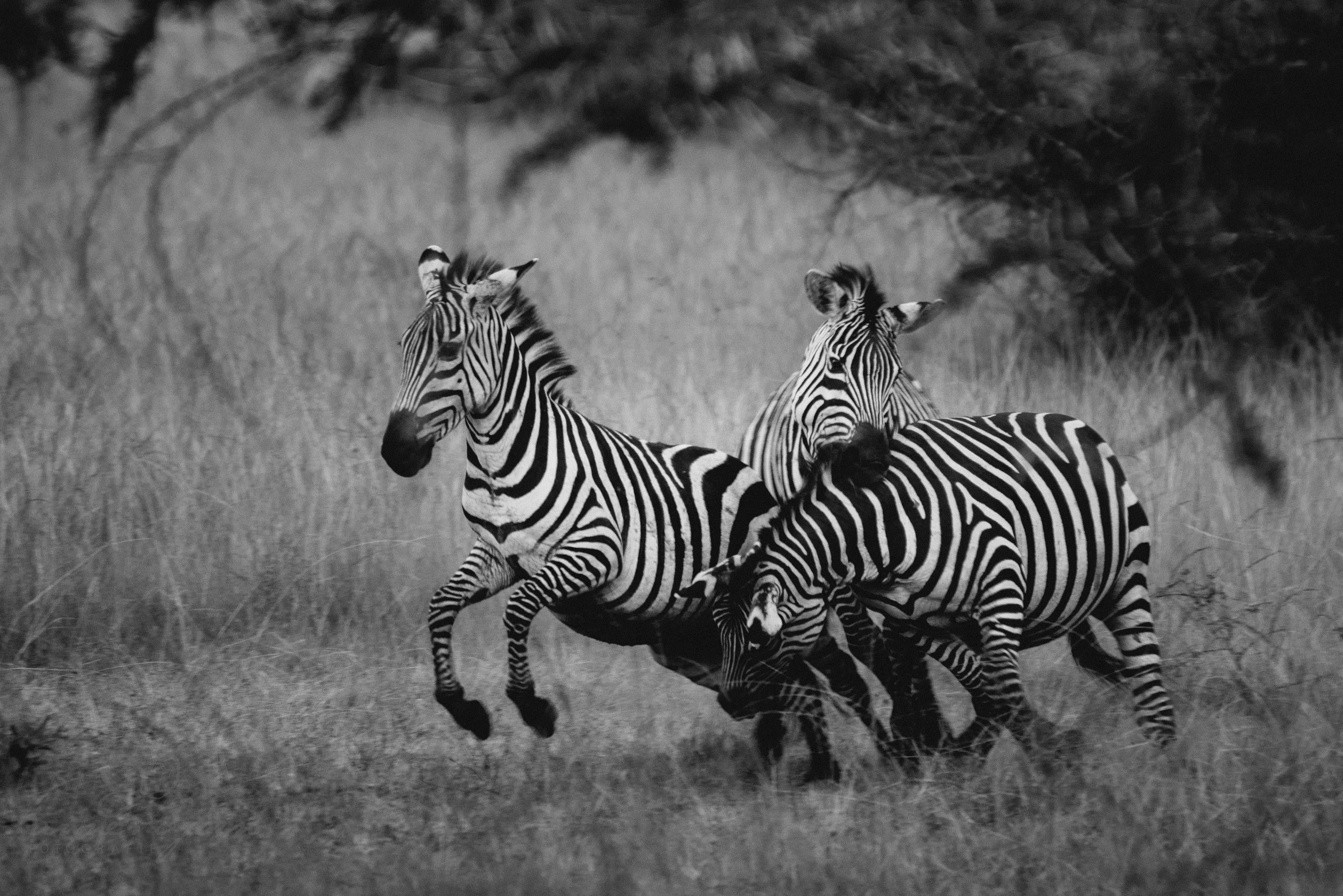 0085 uganda anneundbjoern nd8 8206 2 - This is Uganda (1/2) - 2.500 km mit Jeep & Zelt durchs Land