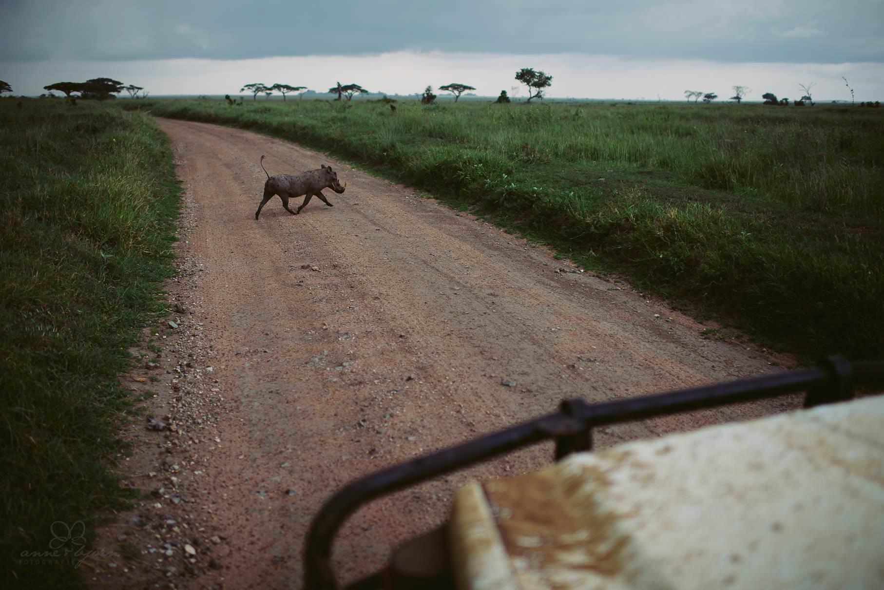 0033 tansania nd8 0336 anne bjoern fotografie hochzeitsfotograf hamburg - This is Tanzania - Serengeti, Kilimanjaro & Sansibar