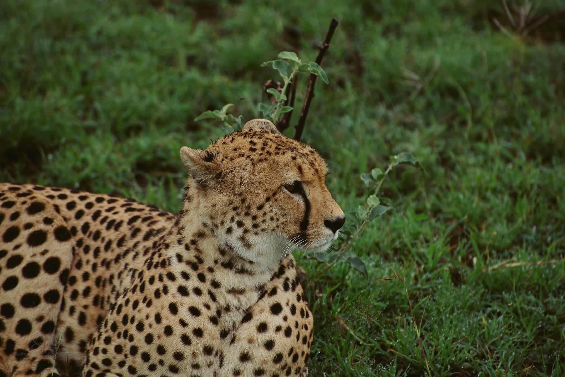 0036 tansania nd8 0626 anne bjoern fotografie hochzeitsfotograf hamburg - This is Tanzania - Serengeti, Kilimanjaro & Sansibar