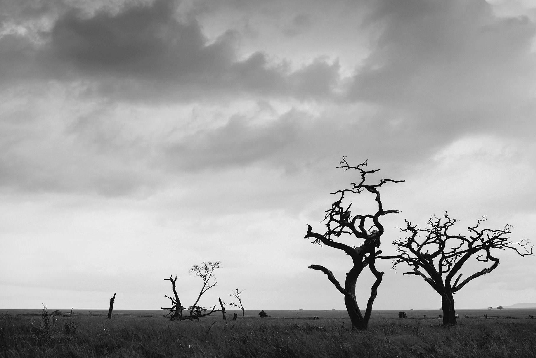 0037 tansania nd8 0329 anne bjoern fotografie hochzeitsfotograf hamburg - This is Tanzania - Serengeti, Kilimanjaro & Sansibar