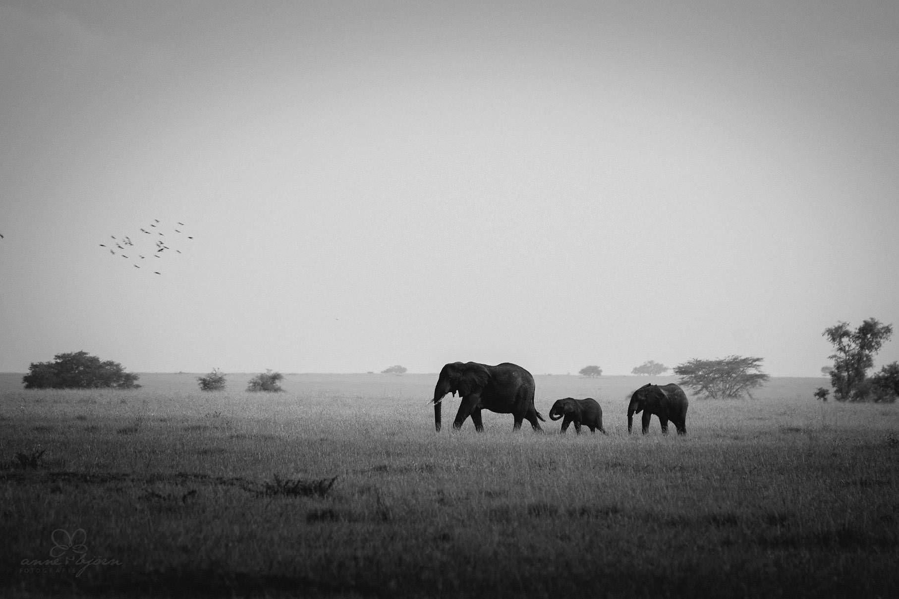0038 tansania nd8 0481 anne bjoern fotografie hochzeitsfotograf hamburg - This is Tanzania - Serengeti, Kilimanjaro & Sansibar
