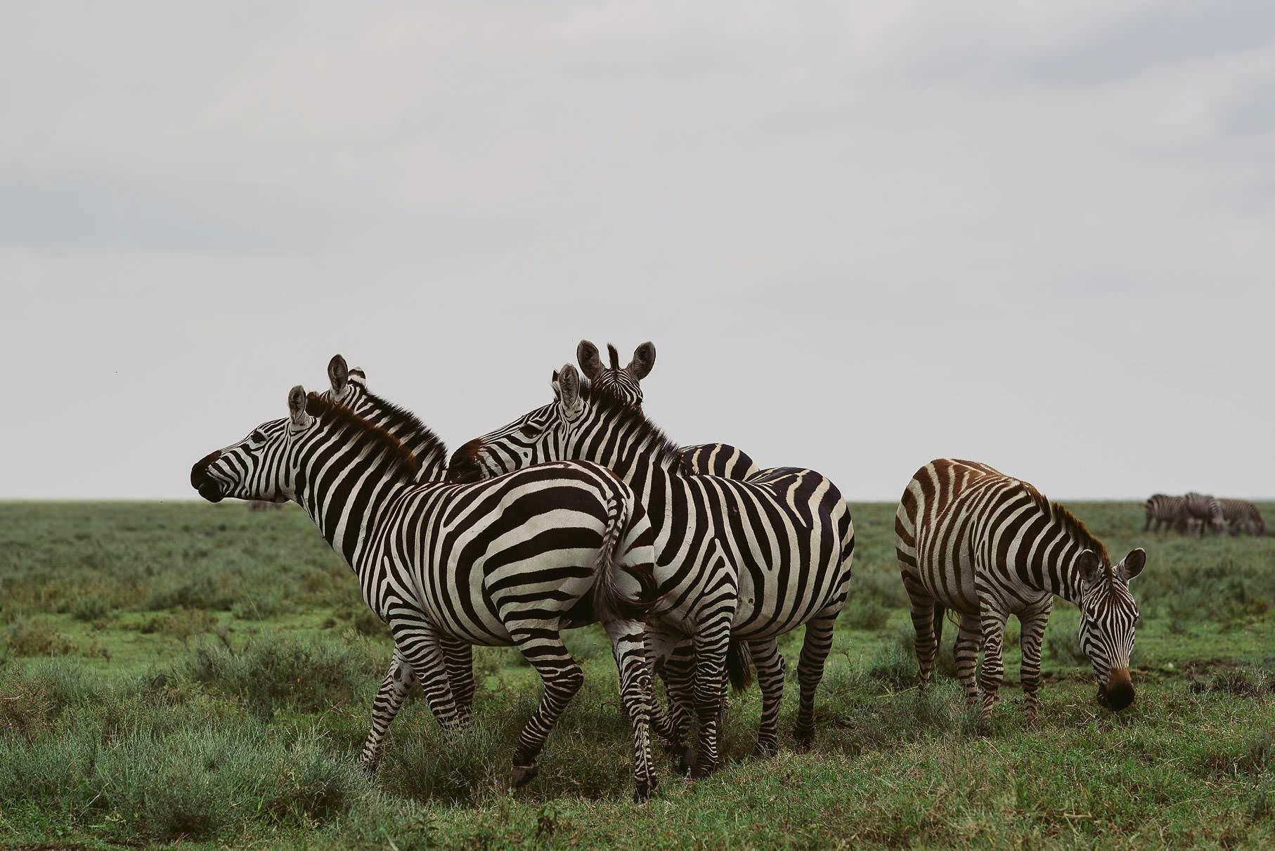 0040 tansania nd6 7385 anne bjoern fotografie hochzeitsfotograf hamburg - This is Tanzania - Serengeti, Kilimanjaro & Sansibar