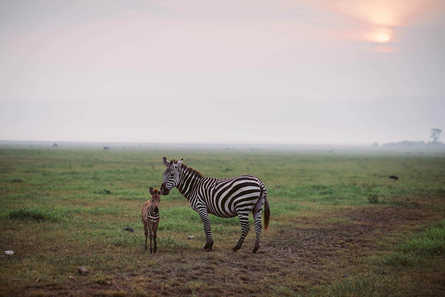 0051 tansania nd8 1383 anne bjoern fotografie hochzeitsfotograf hamburg - This is Tanzania - Serengeti, Kilimanjaro & Sansibar