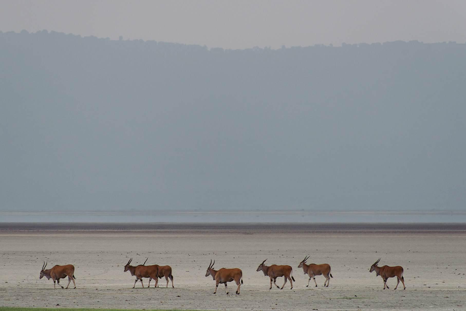0052 tansania nd8 1684 anne bjoern fotografie hochzeitsfotograf hamburg - This is Tanzania - Serengeti, Kilimanjaro & Sansibar