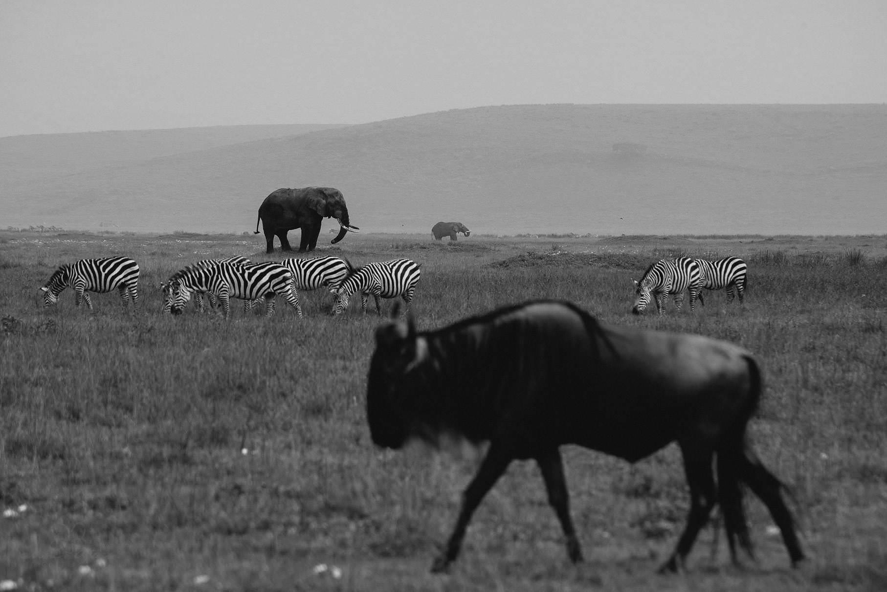 0053 tansania nd8 1535 anne bjoern fotografie hochzeitsfotograf hamburg - This is Tanzania - Serengeti, Kilimanjaro & Sansibar