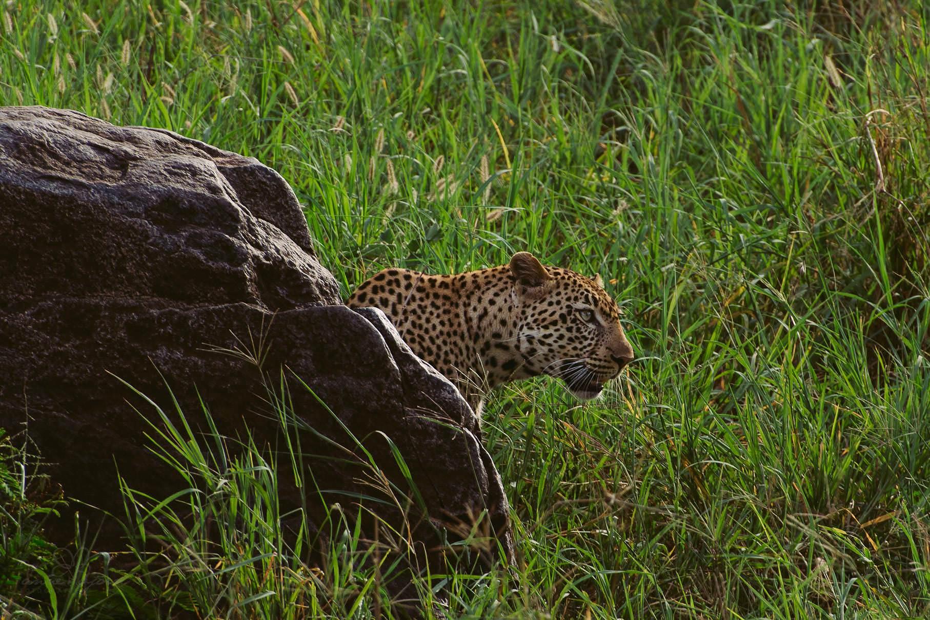 0078 tansania nd8 2191 anne bjoern fotografie hochzeitsfotograf hamburg - This is Tanzania - Serengeti, Kilimanjaro & Sansibar