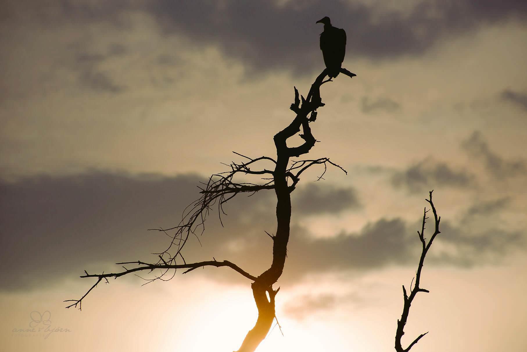 0080 tansania nd6 8580 anne bjoern fotografie hochzeitsfotograf hamburg - This is Tanzania - Serengeti, Kilimanjaro & Sansibar