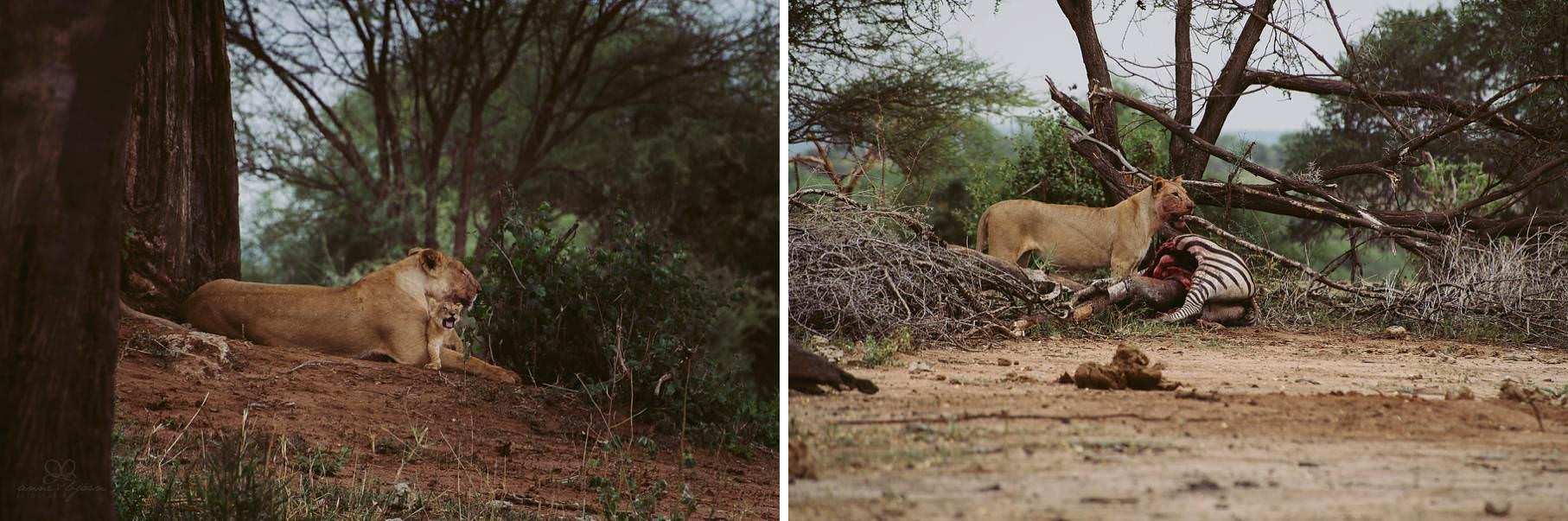 0082 tansania nd8 2828 anne bjoern fotografie hochzeitsfotograf hamburg - This is Tanzania - Serengeti, Kilimanjaro & Sansibar