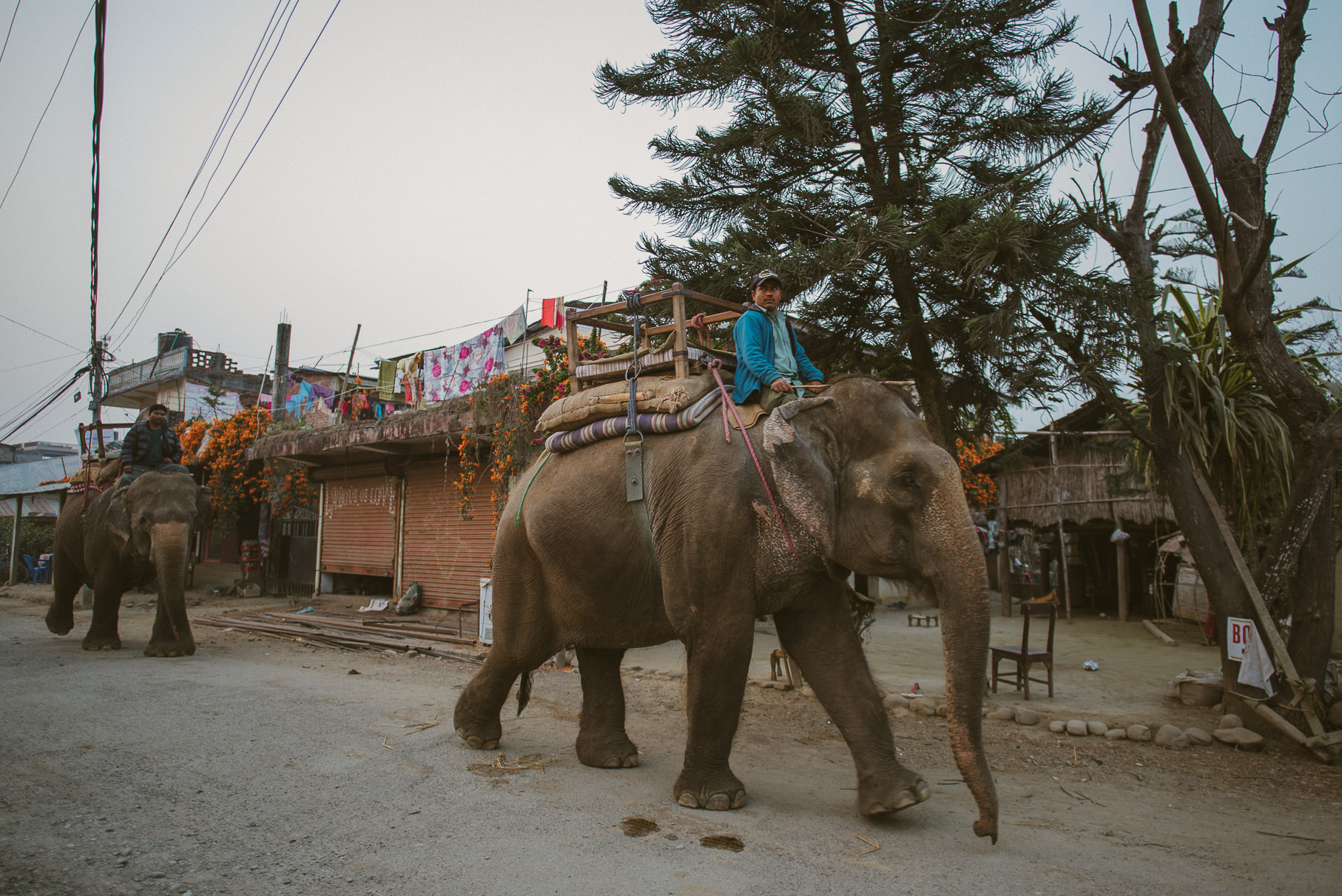 0045 anne und bjoern chitwan nationalpark nepal d75 4989 2 - Nepal Teil 3 - Roadtrip, Chitwan Nationalpark und eine spontane Hochzeit