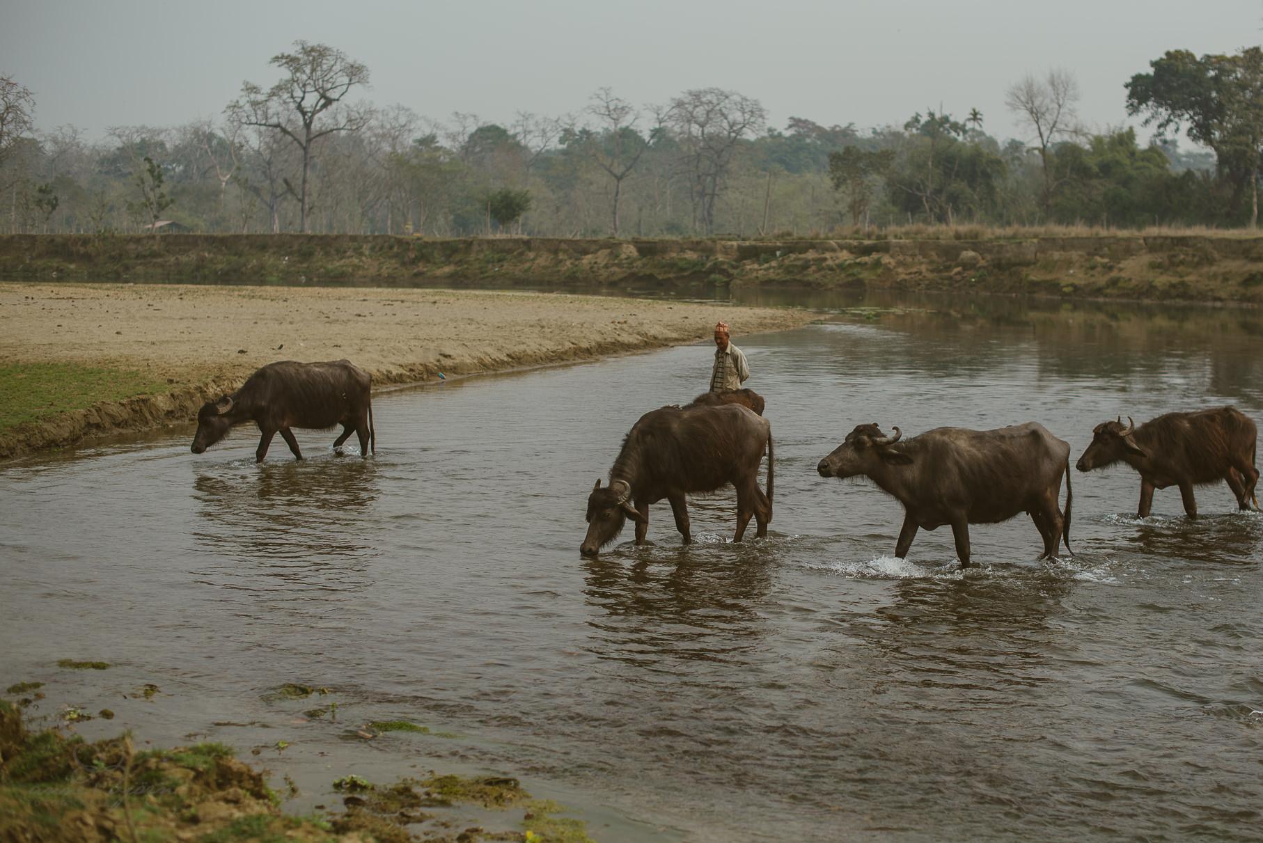 0057 anne und bjoern chitwan nationalpark nepal d75 5133 2 - Nepal Teil 3 - Roadtrip, Chitwan Nationalpark und eine spontane Hochzeit