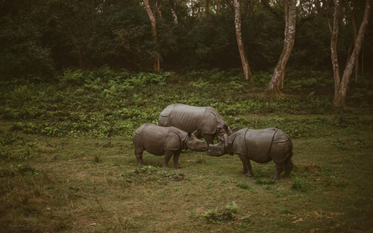 Nepal Teil 3 - Roadtrip, Chitwan Nationalpark und eine spontane Hochzeit