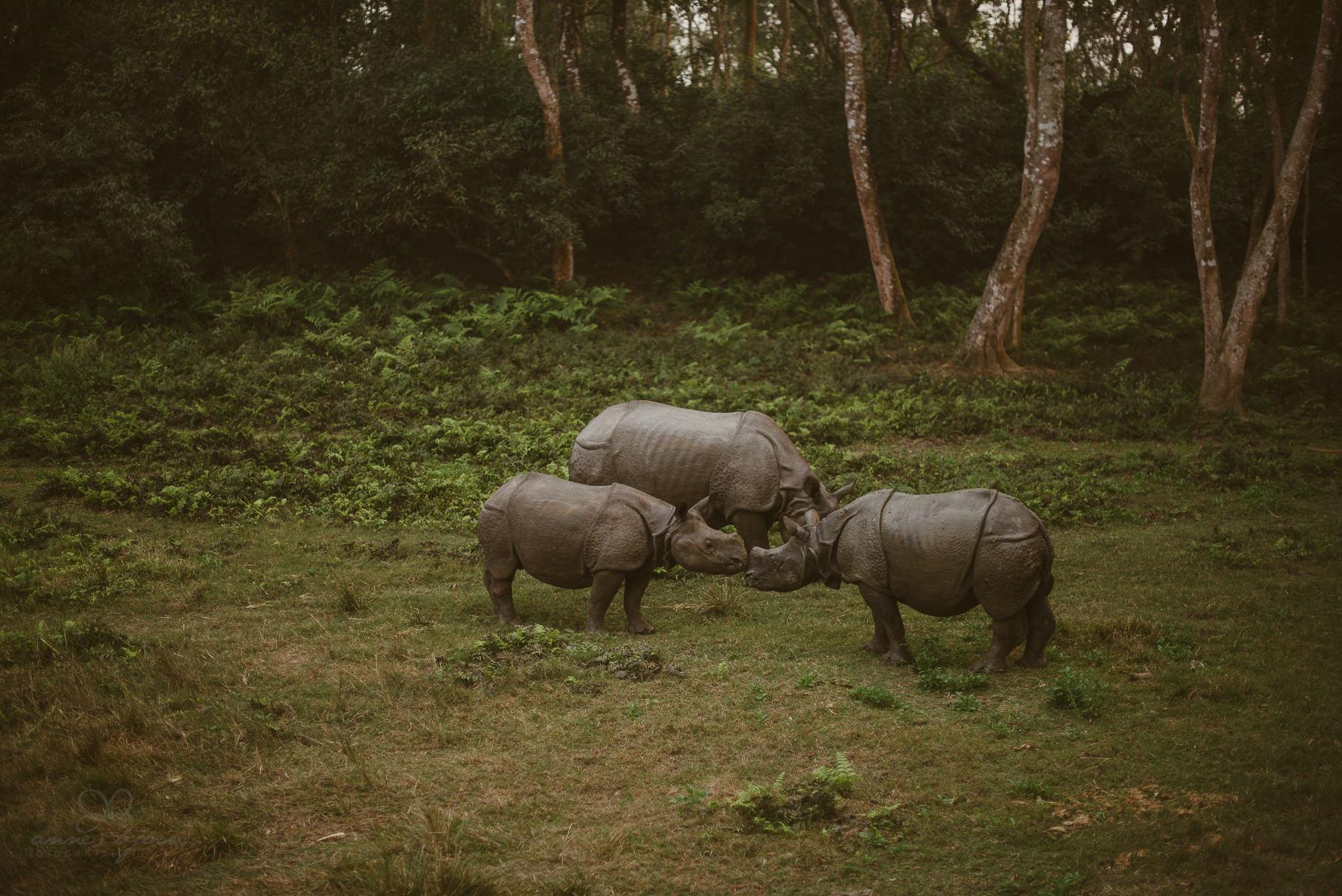 0061 anne und bjoern chitwan nationalpark nepal d75 5267 2 - Nepal Teil 3 - Roadtrip, Chitwan Nationalpark und eine spontane Hochzeit