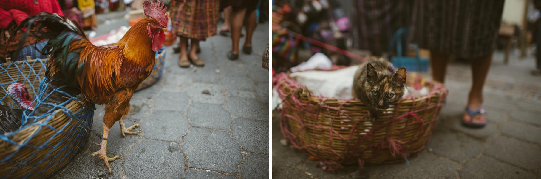 0136 anne und bjoern guatemala d75 2624 - 4 Wochen durch Guatemala - backpacking durch Mittelamerika